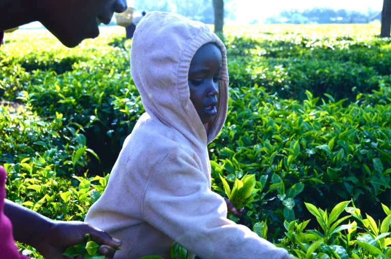 Sharon helps her mom in the tea field.