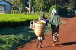 Young Choimim girl helps carry tea leaves basket